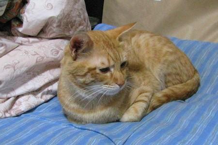2008年9月29日の茶トラのボクちん(4歳)