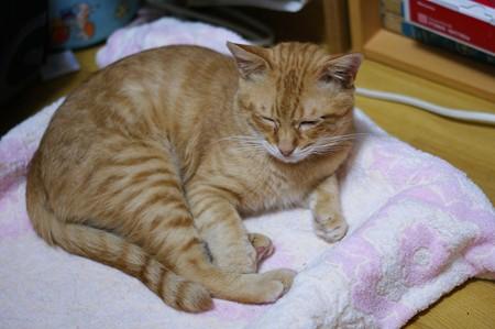 2009年9月29日の茶トラのボクちん(5歳)