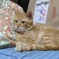 写真: 2008年10月7日のボクチン(4歳)