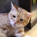 写真: 2010年10月7日の茶トラのボクちん(6歳)