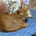 写真: 2008年10月9日のボクチン(4歳)