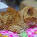 写真: 2011年10月15日のボクチン(8歳)