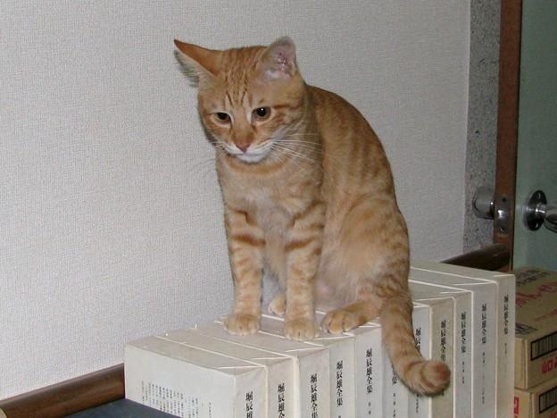 写真: 2008年10月17日の茶トラのボクチン(4歳)