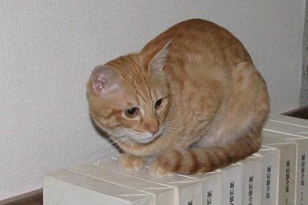 2008年10月17日の茶トラのボクちん(4歳)