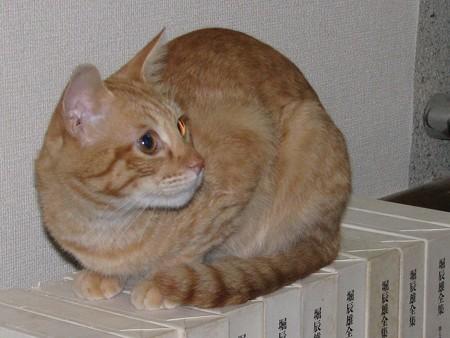 2008年10月17日茶トラのボクちん(4歳)