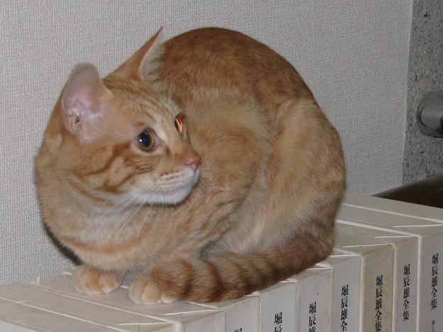 写真: 2008年10月17日茶トラのボクちん(4歳)