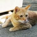 写真: 2008年10月19日のボクチン(4歳)