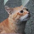 写真: 2009年10月19日のボクチン(5歳)