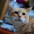 写真: 2011年10月21日のボクチン(7歳)