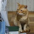 写真: 2009年10月27日のボクチン(5歳)
