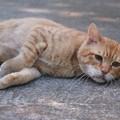 写真: 2010年10月29日のボクチン(6歳)