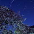 写真: 八重桜と星