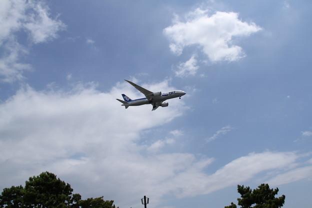 ANA Boeing 787-881(JA824A) 1