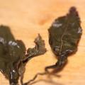 Photos: MARIAGE FRERES MAORI BLUE (NLLE-ZELANDE) 淹れた後の茶葉