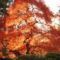 Photos: 函館香雪園