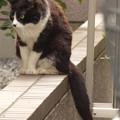 写真: いぶし銀 2014.7.21
