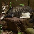 庭石と野良猫 2014.7.24