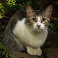 Photos: 我が家の庭にて…2014.8.9