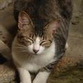 Photos: 我が家の庭にて…2014.8.14?