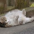 写真: 猫ろぶ!