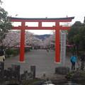 浅間大社 桜の馬場