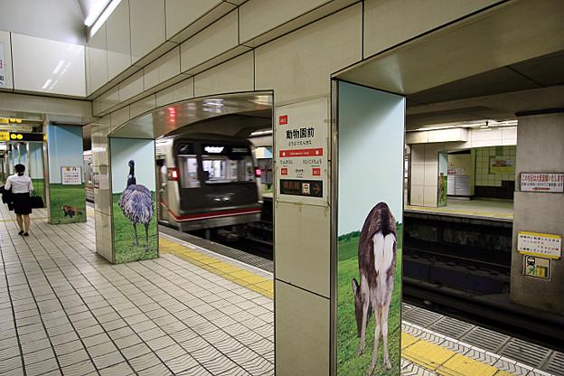 【大阪市営地下鉄】 御堂筋線 淀屋橋→動物園前
