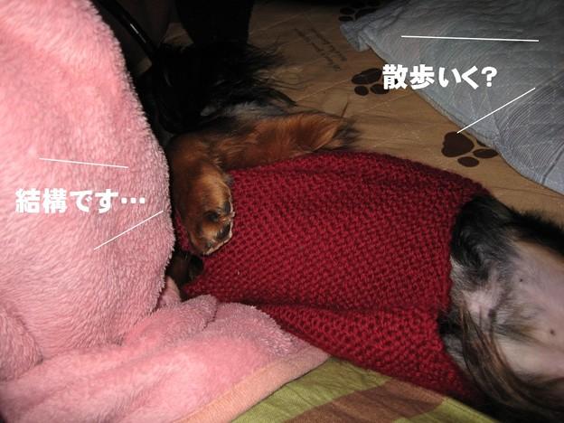 写真: senna0447