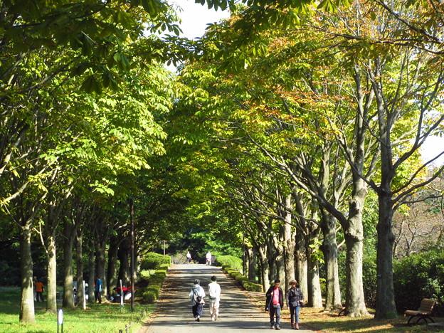 十月の公園