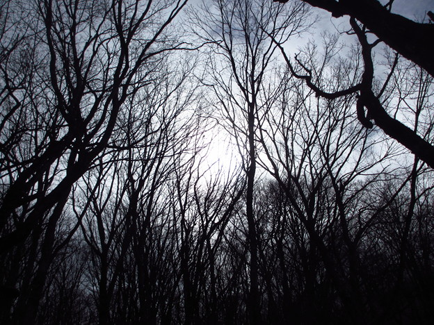 朝靄の樹林