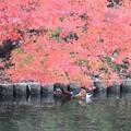 秋のひと時♪