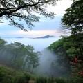 写真: 新緑の鎌倉山