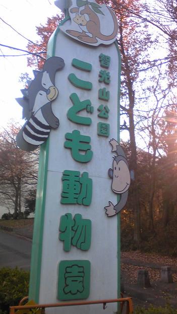 なかなか充実の動物園でした。また来たい( ´ ▽ ` )ノ