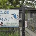写真: バードサンクチュアリ@光が丘2016.05.01(1)