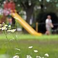 夏々々の公園