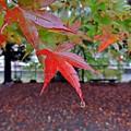 Photos: 秋雨に濡れて