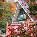 高尾山紅葉2015