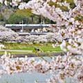 春の中央沿線(2)