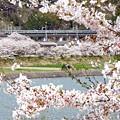 春の中央沿線(3)