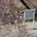 桜咲く停車場(1)