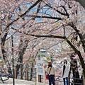 桜咲く停車場(2)