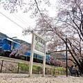 桜咲く停車場(3)