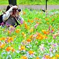 写真: カメラ女子Nちゃん