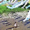 鯉と水遊び