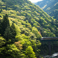 Photos: 新緑をゆく気動車その1