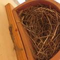 写真: 巣の中