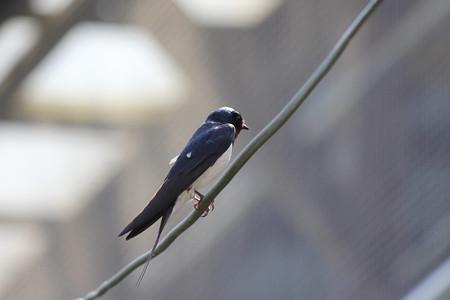 巣の見守り