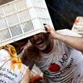Photos: やっぱりパクリだよな、このトマト祭り(笑)by瀋陽 (12)