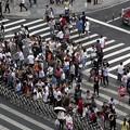 Photos: 恥と思わない??バカにされてるなあ 横断歩道での仕打ち(笑) (2)