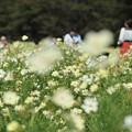 【昭和記念公園:イエローガーデン】3
