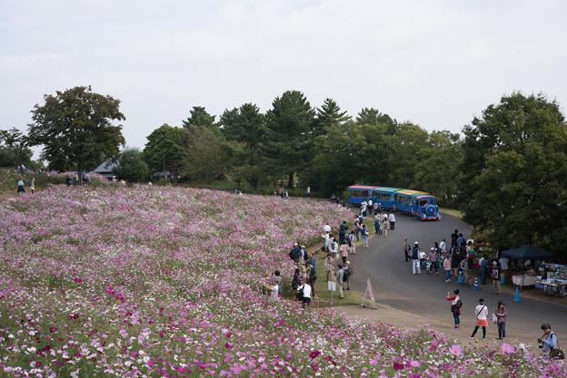 【昭和記念公園(花の丘)】パークトレイン